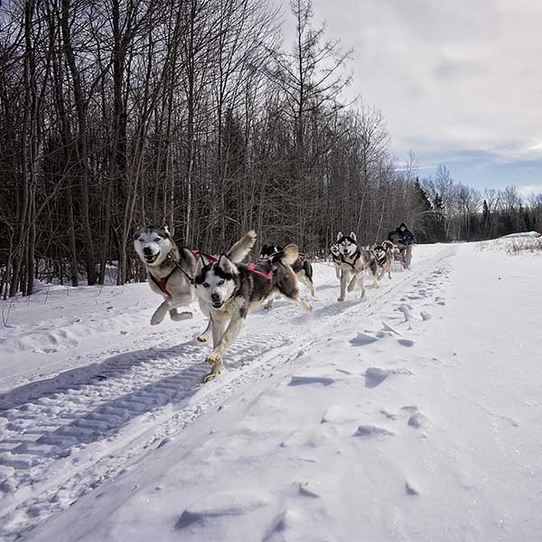 Dog sleddign excursion