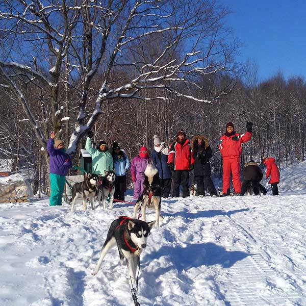 Dog sledding groups