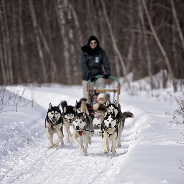 Outdoor activities - Dog sled - Ottawa - Outaouais ...