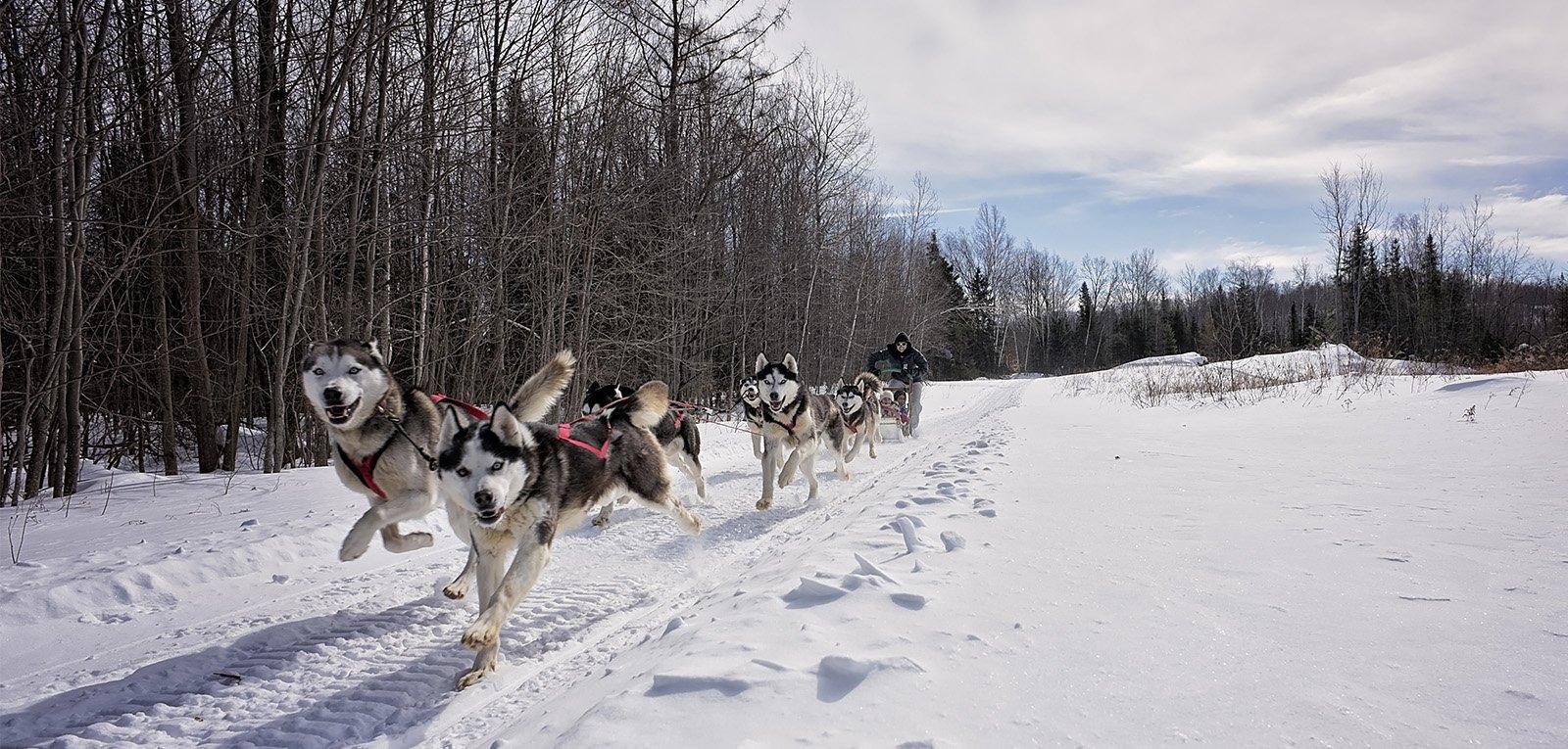 outdoor activities dog sled ottawa outaouais escapade eskimo