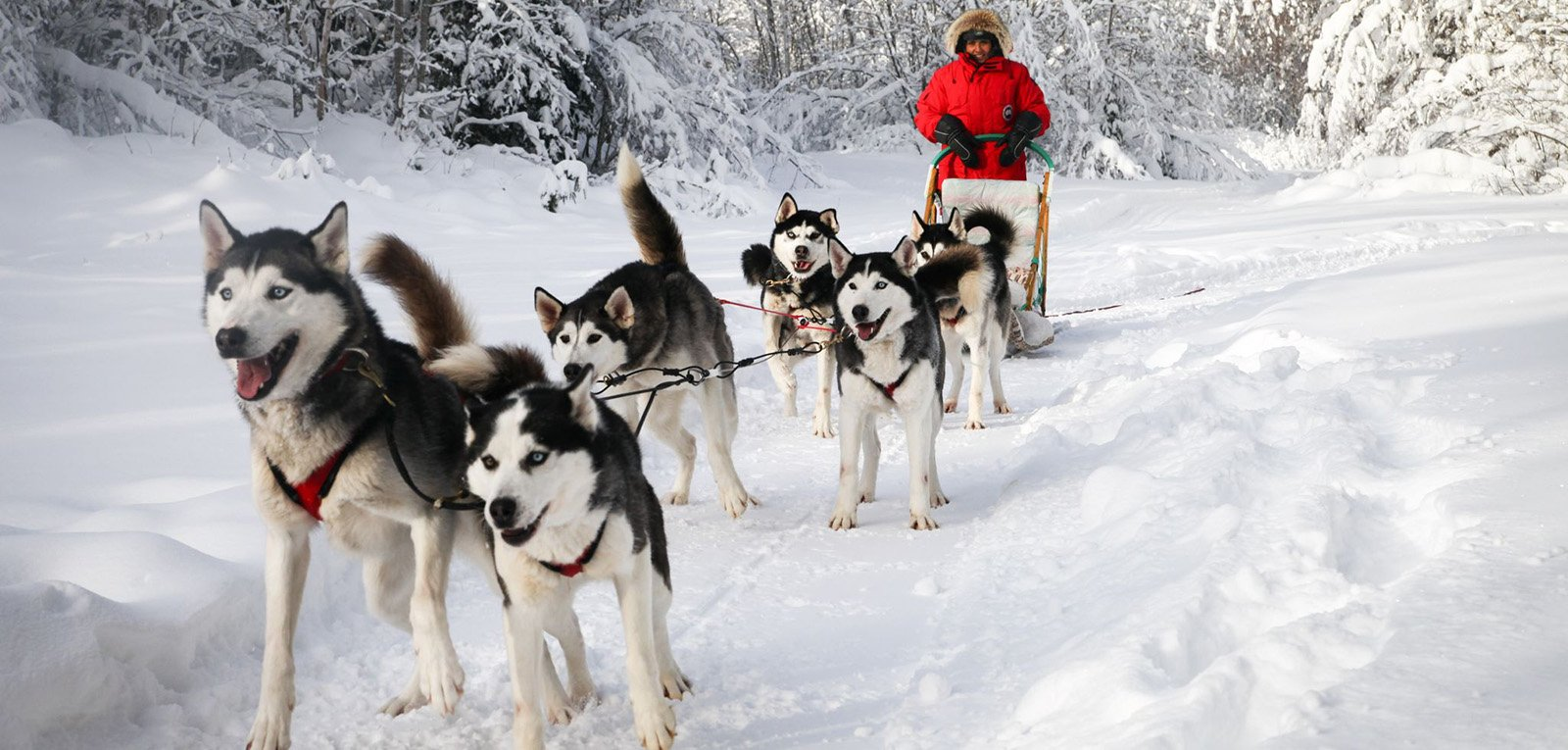 outdoor activities dog sled ottawa outaouais. Black Bedroom Furniture Sets. Home Design Ideas